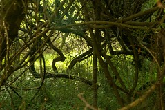 """Tangle • <a style=""""font-size:0.8em;"""" href=""""http://www.flickr.com/photos/10854591@N06/4438089228/"""" target=""""_blank"""">View on Flickr</a>"""