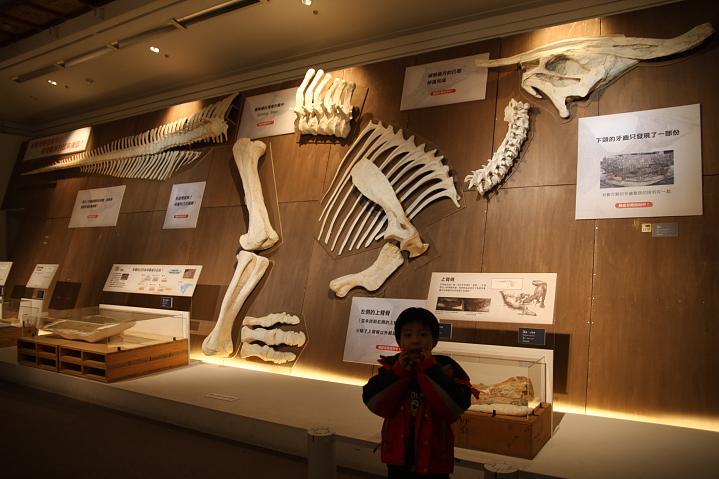 中正廟恐龍展000018