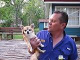 Alphonse - The LSU Singing Dog (juliealicea1947) Tags: dog louisiana lsu tigers alphonse singingdog gotigers