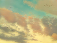 Divine. (Silent Resilience) Tags: camera blue sky orange apple birds clouds photography flying skies gray divine farah iphone iphonegraphy silentresilience