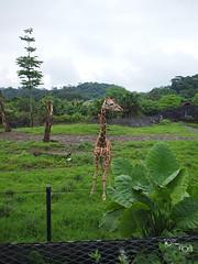 20110602酷節能體驗營 (24) (fifi_chiang) Tags: zoo taiwan olympus taipei ep1 木柵動物園 17mm 環保局 酷節能體驗營