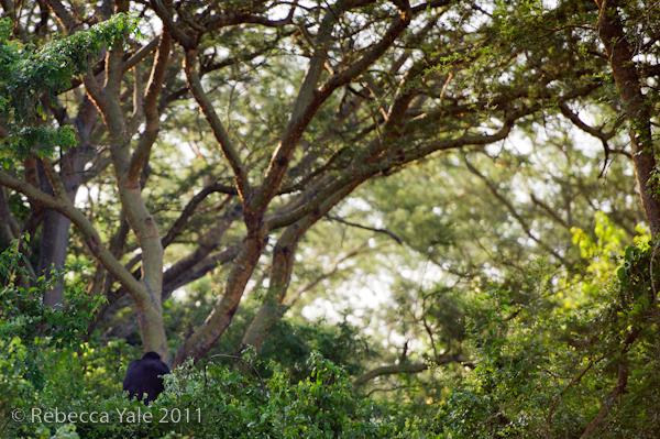 RYALE_Rwanda_Uganda_Safari-259