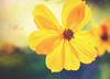 * (mjmatt) Tags: flower texture 100mmmacro fwbotanicalgarden betharmsheimertexture