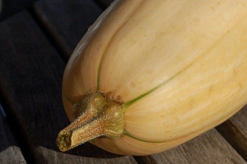 first butternut squash of the fall by Eve Fox, Garden of Eating blog