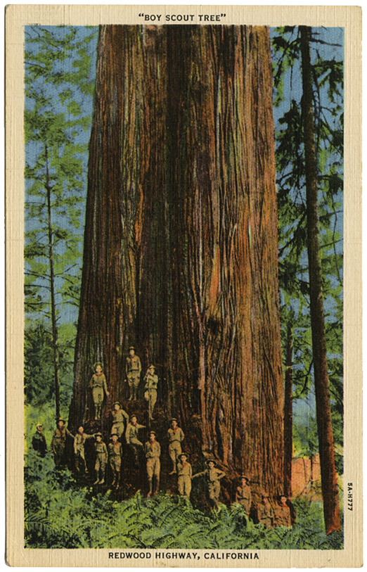 Boy Scout Tree_Redwood Highway_tattteredandlost