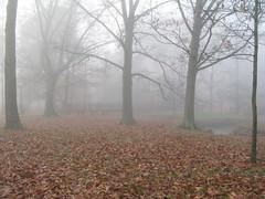 IMG_1894 (BellaEatsBooks) Tags: fog campus indiana bloomington indianauniversity