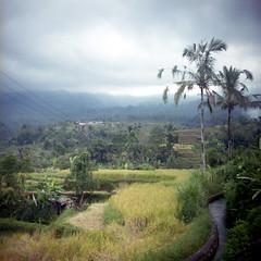 (*YIP*) Tags: bali 120 6x6 film mediumformat indonesia square kodak pro kiev60 iso160 epsonv500 yipchoonhong