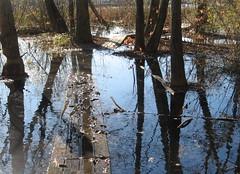 Submerged boardwalk