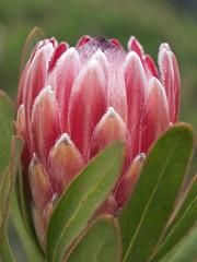 Flower Macro (ozuiko) Tags: flowers macro gardens 50mm olympus zuiko e510 50mmmacro20
