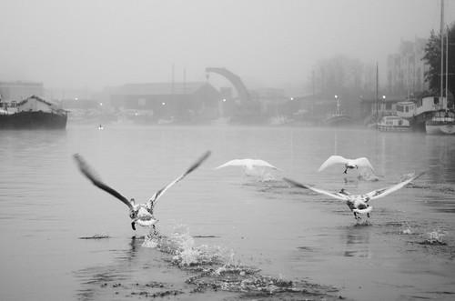 Swanning Off