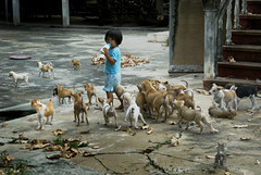 0120 A girl with many pets--Ayuthaya , Thailand (ngchongkin) Tags: dogs thailand niceshot harmony soe nationalgeographic musictomyeyes finegold goldheart thegalaxy beautifulshot abigfave anythingyoulike peaceaward avpa flickrhearts flickraward flickrbronzeaward crystalawards heartawards platinumheartawards flickrestrellas royalawards beautifulaward highqualityimages spiritofphotography qualifiedmembers