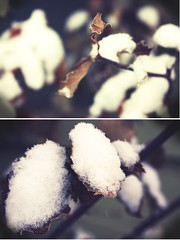 (hannah.dawson) Tags: winter snow cold diptych dof bokeh shallowdepthoffield ruleofthirds warmtones