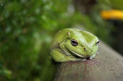 Tree Frog and Passengers