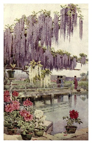 020- Un jardin de peonias-The flowers and gardens of Japan (1908)-  Ella Du Cane