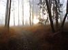 Morgens (NPPhotographie) Tags: wood morning autumn sun mist tree art fall nature fog forest sunrise germany way path creative dust oberberg platinumphoto magicunicornverybest magicunicornmasterpiece