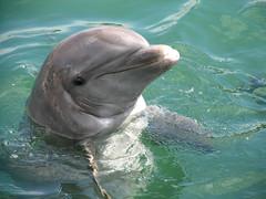Dolphin (Alan C Solomon) Tags: estremità