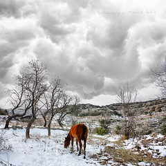 Caballo rojo / Red horse (MAIKA 777) Tags: winter españa horse snow cold clouds caballo cheval spain europe flickr hiver nieve nubes fred invierno neige nuages froid frio neu cavall nuvols castellón benassal benasal invern img1905 canoneos450d altomaestrazgo laltmaestrat maika777 loquetedigalarubia