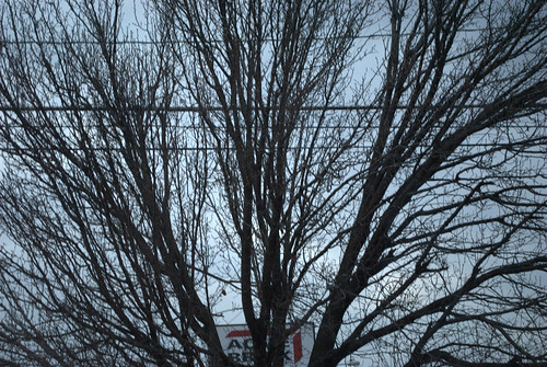 branches and wires