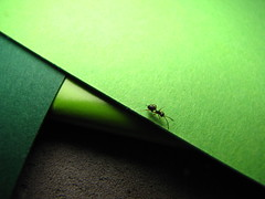 Green paper and ant... (neibitloef) Tags: paper ant natur grün papier ameise mywinners ourplanet