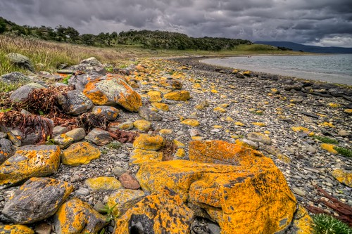 Orange Lichen on the Beach