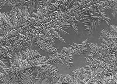 FROST WORK (klickdich) Tags: windows winter macro ice frost fenster makro eis windowpane eisblumen fensterscheibe frostwork canon5dmarkii