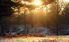 (andrew evans.) Tags: lighting wood morning trees winter light england sun white mist snow cold tree nature misty fog fairytale forest sunrise landscape golden countryside kent woods nikon frost shadows snowy warmth flare wonderland storybook magical 70200 f28 enchanted d3