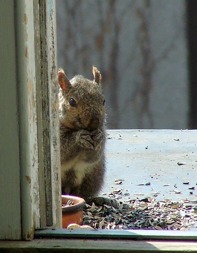 I'm a hungry little squirrel, please help me