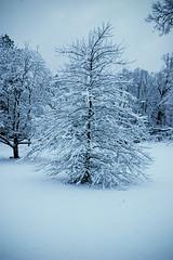 Snow-4857