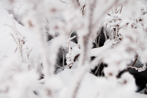 Extremely frosty winter (Photo by iHanna - Hanna Andersson)