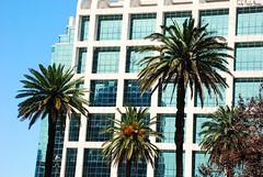 The city (LADRONA DE LUZ*~) Tags: edificio thecity palmeras cielo reflejo montevideo nikond80 ledapaulanavas