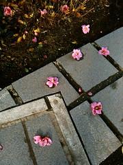 bellevue botanical garden petals