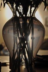 Silhouette (Steven Salazar) Tags: plants vase nikond3000 dpssilhouettes