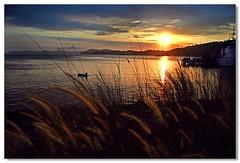 Almost ending (Dolly MJ) Tags: sunset sky sun color beach sundown kotakinabalu redsky sabah kk beautifulsunset colorfulclouds sepanggar kotakinabalusunset sabahsunset borneosunset beautifulkk