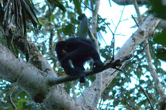 DSC_8928.NEF (Bird Brian) Tags: peru amazonbasin tambopataresearchcentre