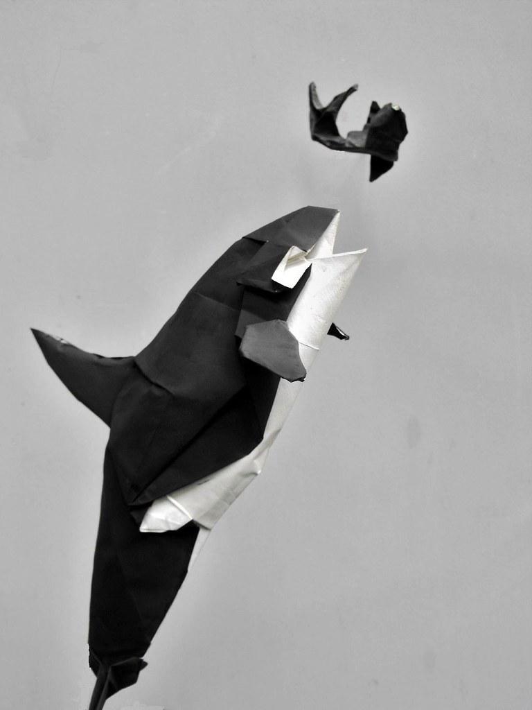 En La Peninsula Valdes Argentina ERIC MADRIGAL Tags Origami Orca Kamiya