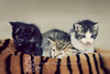 brothers .. (Fatemah.) Tags: light pets color cute animals canon photo flickr babies natural brothers gabe kitties blacky dashki
