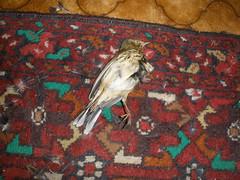 Surprise bird
