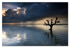 Measure These Things by Your Eyes ([ Kane ]) Tags: morning storm tree wet water rain clouds sunrise dead photography dawn live band australia josh qld queensland ripples kane relfections gledhill kanegledhill wwwhumanhabitscomau kanegledhillphotography