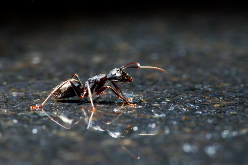 Ant on Granite