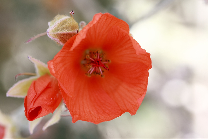 041610_flower09
