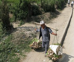 Peasant - Bonde med lg (bjlarsendk) Tags: nepal temple rhino farmer himalaya ricefields annapurna rhinoceros slum sadhu gath mahout nsehorn elefanter boudhanathstupa katmadu indiskelefant templesofnepal