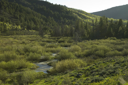 Uinta Forest, Utah
