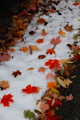an early fall snow (Anitab) Tags: snow fall leaves westvirginia