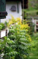 (Mariana B Rezende) Tags: green planta dof bokeh 2009 fazenda pref cocheira