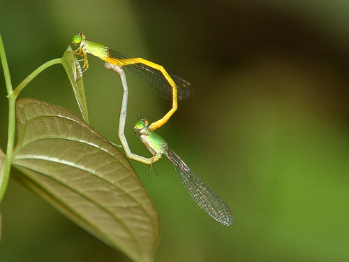 Damsels in love ;-)