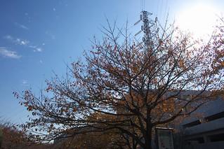 町田樹 画像87