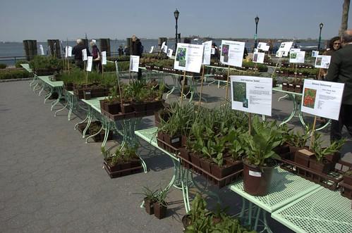 Battery Park Plant Sale