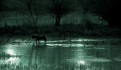 the light of the moon (sermatimati) Tags: italy parco animals countryside nikon italia country natura luna fantasia luci a1 inverno paesaggi cavallo atmosfera luce umbria controluce lazio oasi alviano favole pascoli incanto suggestioni allevamenti lagodialviano faunaitaliana dallautostrada animaliurbani lucedellaluna sognidinfanzia animaliutili sermatimati parcodeltevere