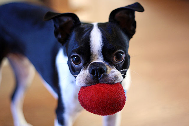 kosmo's red ball