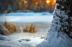 Snowing (Latyrx) Tags: light sunset shadow lake snow tree nature photoshop suomi finland landscape photography 50mm photo nikon frost graphic details stock perspective finnish nikkor f18 sell 2009 resize latyrx d90 nikond90 mikkolagerstedt